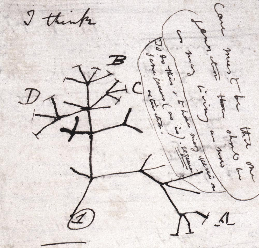 1000  images about darwin on pinterest